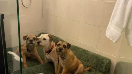 Wenn die Botschafterin den 1. August in der Schweiz feiert, dann sind die Hunde im Badezimmer. Sie oder ihr Mann versuchen, die Tiere zu beruhigen, während die andere Hälfte auf der Terrasse das Feuerwerk anschaut.
