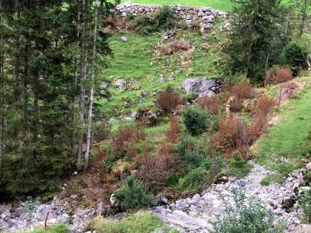 Herbizidbehandlung von Büschen und allerlei Pflanzen auf steinigem Gelände.