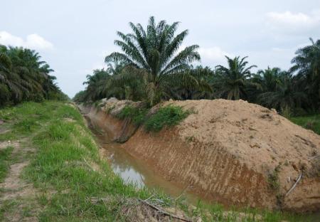 Auf einer industriellen Ölpalmenplantage befindet sich ein kürzlich errichteter Hochwasserschutzdamm. Copyright: Jennifer Merten. Gemäss einem Leser ist es ein Entwässe
