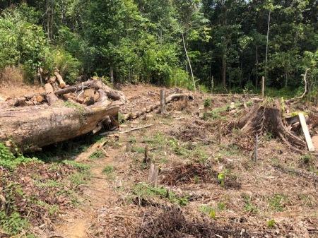 Urwald wird gerodet in Indonesien, Malaysia, Südamerika, Afrika usw. Hauptsage: Wir haben billige Rohstoffe!