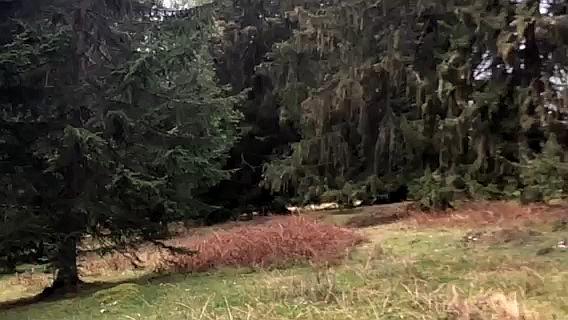 Foto 24.9.20: grossflächiger Herbizideinsatz in Wytweide