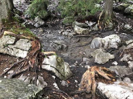 Die Wurzeln der Bäume im Wald leiden. Copyright: Vater Muggli