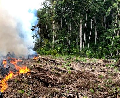 Tagtäglich werden grosse Urwaldflächen abgebrannt.