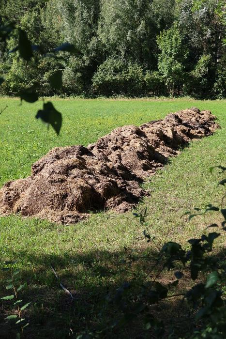 """In der neuen Bündner <a href=""""&quot;https://www.gr-lex.gr.ch/app/de/texts_of_law/910.150&quot;"""" target=""""&quot;_blank&quot;"""" rel=""""&quot;noopener&quot;"""">Verordnung über den Gewässerschutz in der Landwirtschaft</a> (KGSchVL) steht in Art. 9 das Folgende: """"Die Zwischenlagerung von Mist auf dem Feld in den Gewässerschutzbereichen üB und Au/Ao ist für längstens acht Wochen zulässig. Während der Vegetationsruhe, bei Gefährdung der Gewässer und in den Grundwasserschutzzonen S2 und S3 ist sie untersagt."""" Ein Misthaufen im Gewässerschutzbereich Ao neben der Landquart in Malans, fotografiert am 3.9.20. Wie lange liegt er schon? Wie lange wird er hier noch liegen?<br /> In der neuen Bündner <a href=""""https://www.gr-lex.gr.ch/app/de/texts_of_law/910.150"""" target=""""_blank"""" rel=""""noopener"""">Verordnung über den Gewässerschutz in der Landwirtschaft</a> (KGSchVL) steht in Art. 9 das Folgende: """"Die Zwischenlagerung von Mist auf dem Feld in den Gewässerschutzbereichen üB und Au/Ao ist für längstens acht Wochen zulässig. Während der Vegetationsruhe, bei Gefährdung der Gewässer und in den Grundwasserschutzzonen S2 und S3 ist sie untersagt"""