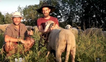 Bild aus dem eindrücklichen Video (auf Bild klicken!), das Lebensweise der Schäfer und Nutzen der Wanderschafhaltung aufzeigt. Copyright: Paula & Konsorten (Paula ist das Leitschaf).