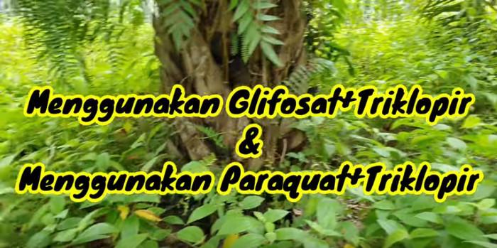 Mischen von Glyphosat und Triklopir & Paraquat + Triklopir