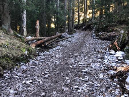 Der geschützte historische Wanderweg beim Zwüschet Mythen SZ wurde massiv verbreitert, Bäume wurden gefällt ... alles illegal! Copyright: Tobeltoni