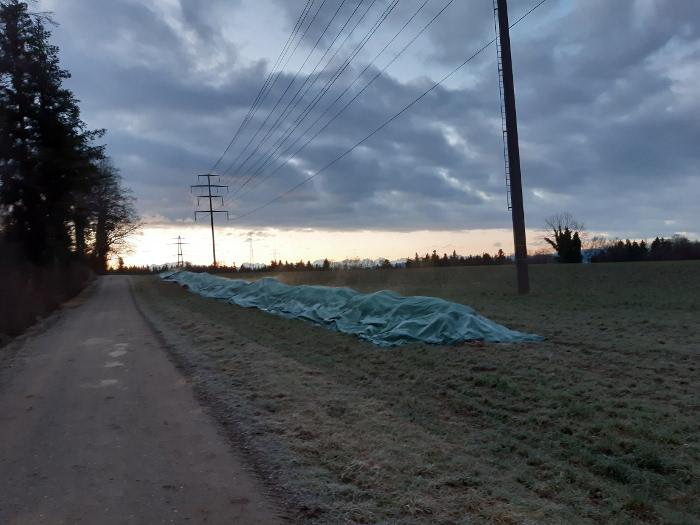Diese Misthaufen bei Uster ZH liegt seit 15.12.20 im Feld, darf gedeckt sechs Wochen hier bleiben.