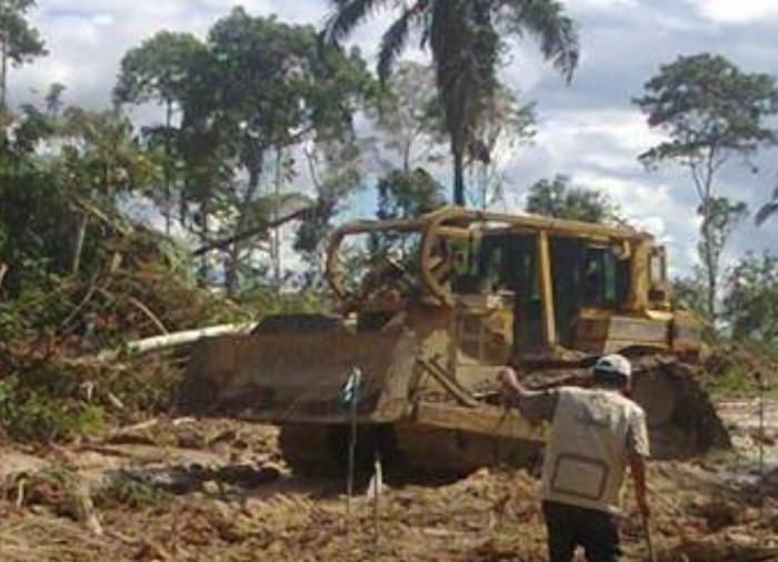 Regenwaldzerstörung für Palmöl in Peru. Copyright: Diálogo Chino