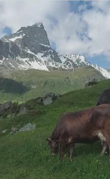 Das Val Faller ist ein rund vier Kilometer langes linkes Seitental des Oberhalbstein im Schweizer Kanton Graubünden.