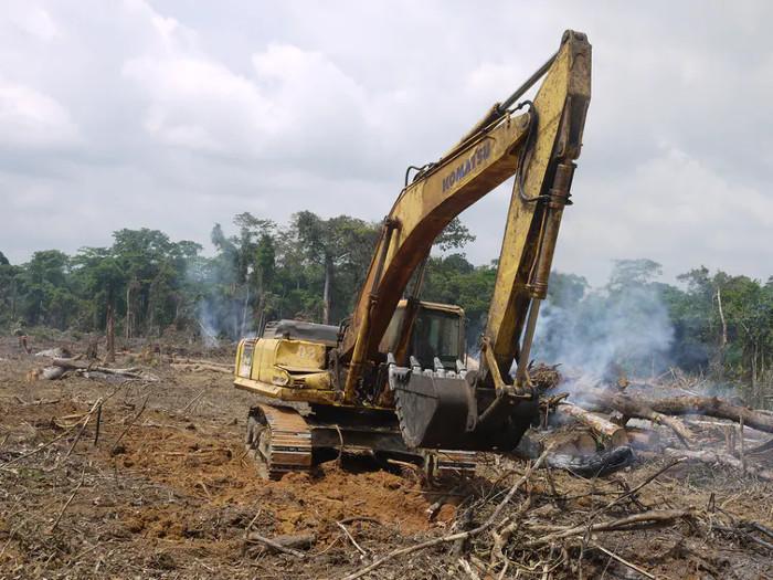 Im Süden Chinas wurden die meisten einheimischen Regenwälder für Nutzpflanzen wie Gummibaumplantagen abgeholzt, wie hier in der Region Xishuangbanna zu sehen. Copyright: William Laurance.