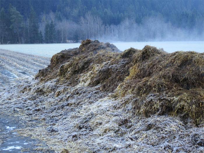 Mist vom Stall direkt auf ein abgeerntetes Maisfeld, wo er dann monatelang ungedeckt liegen blieb. Winterstimmung 12.1.14.