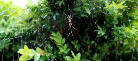 Grosse Spinne