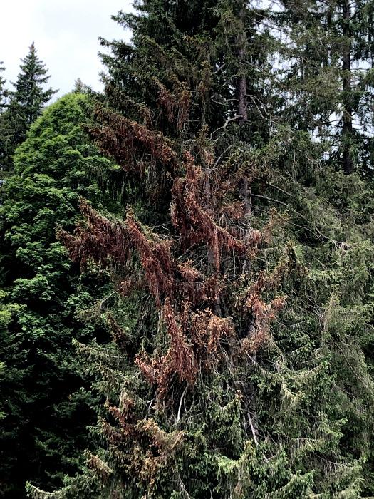 Mottfeuer verursachen immer wieder Baumschäden. Foto 14.7.21