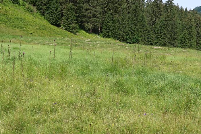 Vorne bestehende Weide, hinten strukturverbessert.