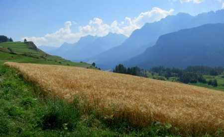 1987 wurde die Genossenschaft Gran Alpin gegründet, um den ökologischen Bergackerbau in den Bergtälern Graubündens zu fördern. 1996 erfolgte dann die Umstellung auf den kontrolliert biologischen Anbau (Bio-Suisse Knospe). Heute produzieren neunzig Bio-Betriebe etwa 500 Tonnen Weizen, Roggen, Speisegerste, Braugerste, Dinkel (Urdinkelsorten), Nackthafer und Buchweizen.