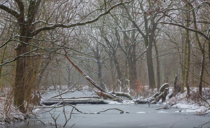 Der Leipziger Auwald - ein Nachruf? Video 1:34:19 NuKLA e.V. 13.1.2